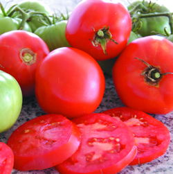 TOMATO, IND * BRANDYWINE ORIGINAL * HEIRLOOM SEEDS 2014