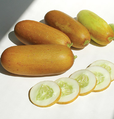CUCUMBER * POONA KHEERA * HEIRLOOM SEEDS 2014