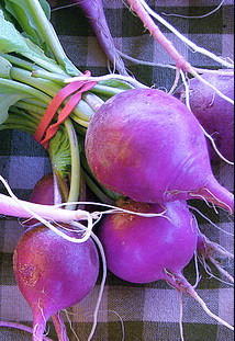 RADISH * PURPLE OLIVE * HEIRLOOM SEEDS 2013