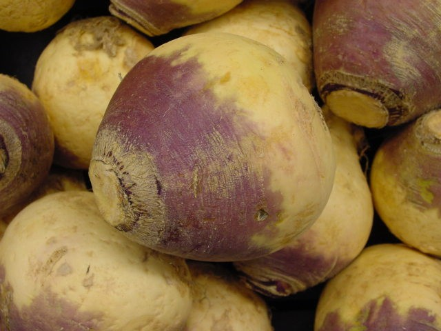 RUTABAGA * AMERICAN PURPLE TOP * HEIRLOOM SEEDS 2014