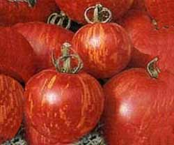 TOMATO, IND * TIGERELLA * HEIRLOOM SEEDS 2014