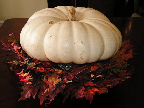 PUMPKIN * OLD BOER WHITE * HEIRLOOM SEEDS 2013