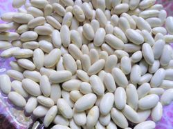 BEAN, BUSH * HANKS XTRA SPECIAL BAKING BEAN * ORGANIC HEIRLOOM SEEDS 2021