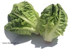 LETTUCE * LITTLE GEM OLD FRENCH ROMAINE * ORGANIC HEIRLOOM SEEDS 2021
