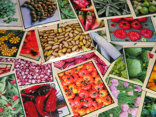 CHERRYGAL ORGANIC HEIRLOOM SEEDS * 50 for 50 SPECIAL * 2019