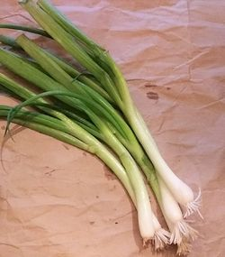 ONION * WELSH * ORGANIC HEIRLOOM SEEDS 2021