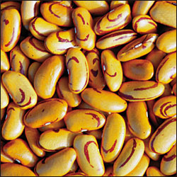 BEAN, BUSH * TIGER EYE * ORGANIC HEIRLOOM SEEDS 2017