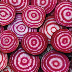 BEET * CHIOGGIA * ORGANIC HEIRLOOM SEEDS 2021