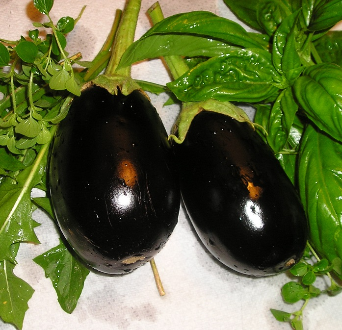 EGGPLANT * BLACK BEAUTY * ORGANIC HEIRLOOM SEEDS 2018