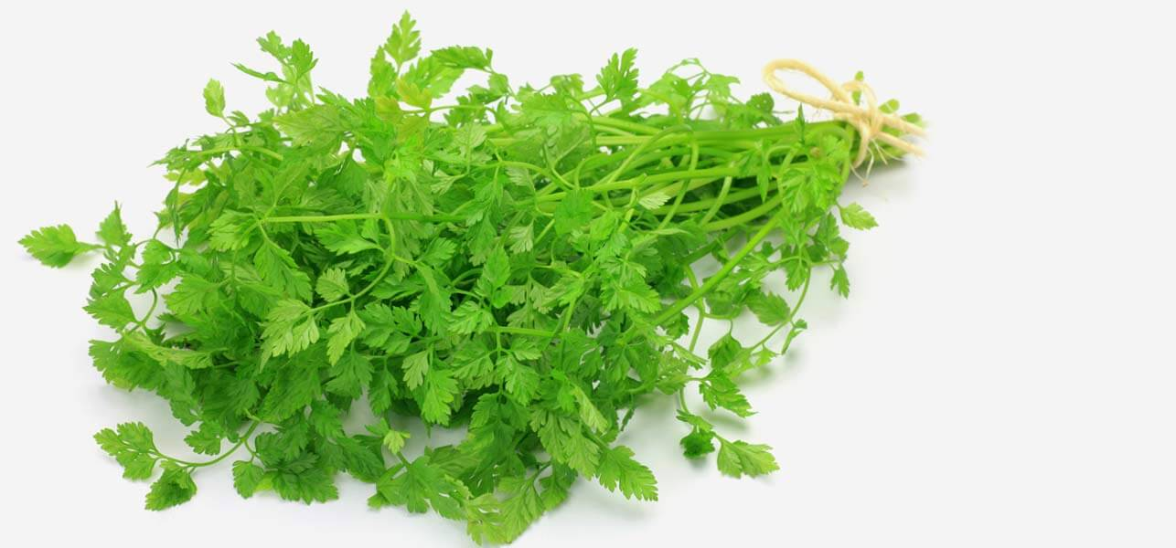 HERB * CHERVIL * ORGANIC HEIRLOOM SEEDS 2018