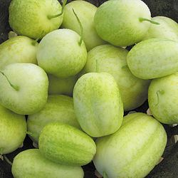 CUCUMBER * CRYSTAL APPLE * HEIRLOOM SEEDS 2018