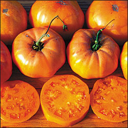 TOMATO * DR WYCHE'S YELLOW * ORGANIC HEIRLOOM SEEDS 2017