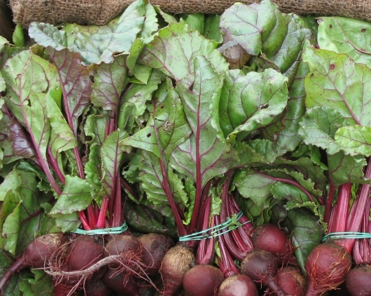 BEET * EARLY WONDER TALL TOP * ORGANIC HEIRLOOM SEEDS 2018