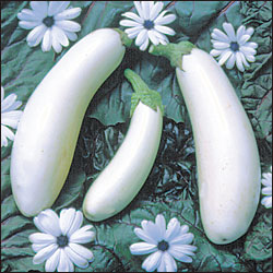 EGGPLANT * CASPER * ORGANIC HEIRLOOM SEEDS 2018