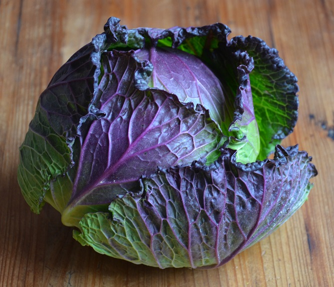 CABBAGE * JANUARY KING * ORGANIC HEIRLOOM SEEDS 2017
