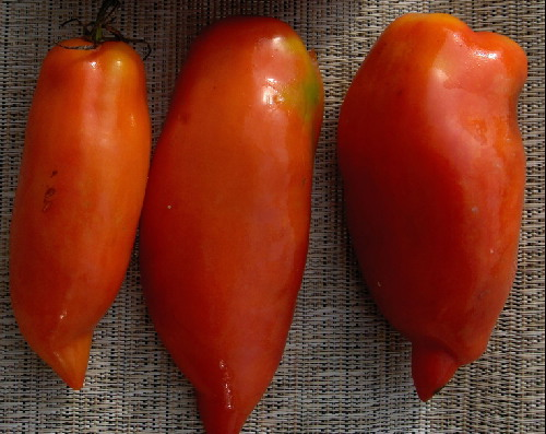 TOMATO * JERSEY DEVIL * ORGANIC HEIRLOOM SEEDS 2017