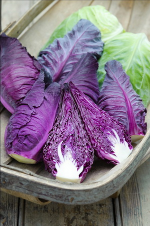 CABBAGE * KALIBOS RED * ORGANIC HEIRLOOM SEEDS 2017