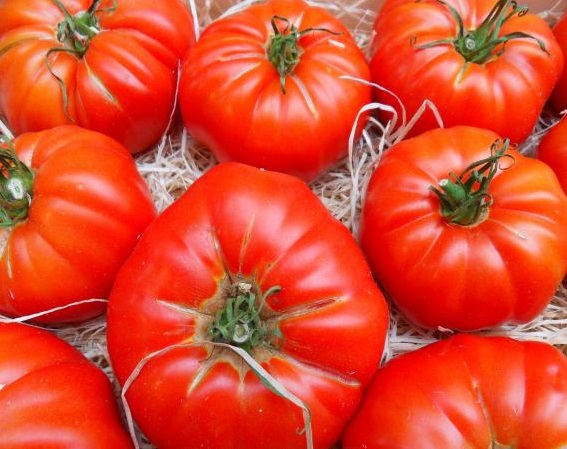 TOMATO * MARMANDE * ORGANIC HEIRLOOM SEEDS 2017