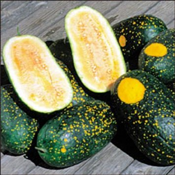 WATERMELON * MOON & STARS YELLOW * ORGANIC HEIRLOOM SEEDS 2017