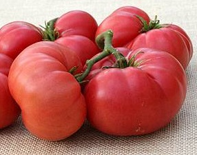 TOMATO * NEW BIG DWARF * ORGANIC HEIRLOOM SEEDS 2017