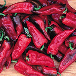 PEPPER, SWEET * TOLLI'S SWEET ITALIAN * ORGANIC HEIRLOOM SEEDS 2018