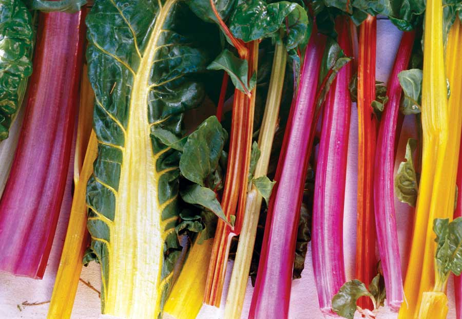 CHARD * RAINBOW * ORGANIC HEIRLOOM SEEDS 2020