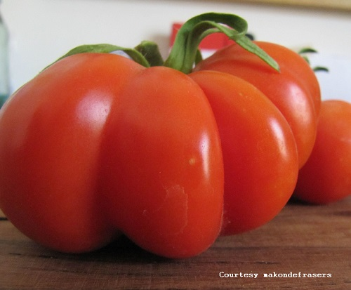 TOMATO * ROSSO SICILIANO * ORGANIC HEIRLOOM SEEDS 2018
