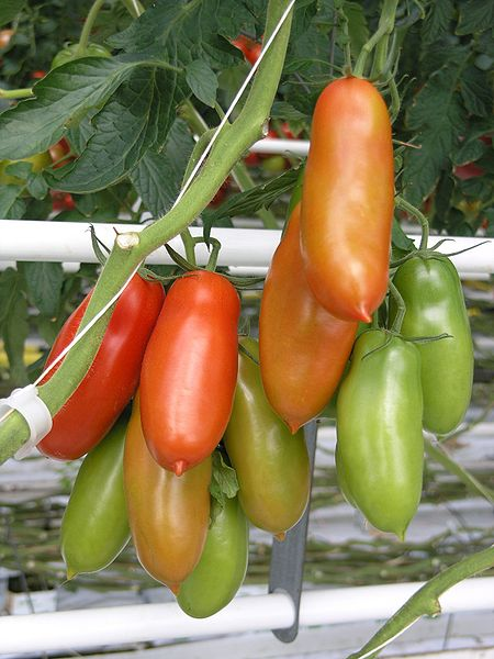 TOMATO * SAN MARZANO * ORGANIC HEIRLOOM SEEDS 2018
