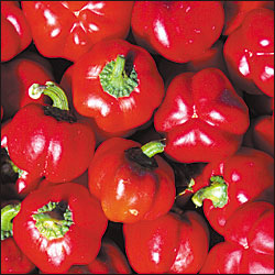 PEPPER, SWEET * SHEEPNOSE PIMENTO * ORGANIC HEIRLOOM SEEDS 2021