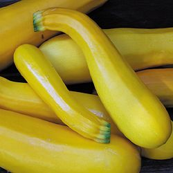 SQUASH * GOLDEN ZUCCHINI * ORGANIC HEIRLOOM SEEDS 2018
