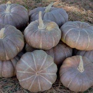 SQUASH * STRAWBERRY CROWN * ORGANIC HEIRLOOM SEEDS 2018