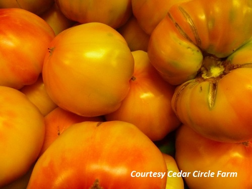 TOMATO * STRIPED GERMAN * ORGANIC HEIRLOOM SEEDS 2018