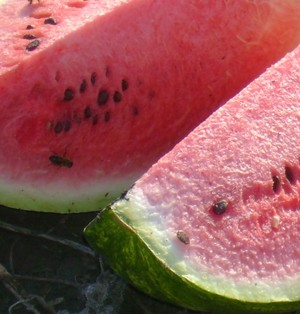 WATERMELON * SWEET DAKOTA ROSE * ORGANIC HEIRLOOM SEEDS 2017