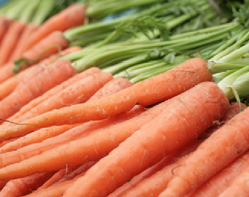 CARROT * TENDERSWEET * ORGANIC HEIRLOOM SEEDS 2018