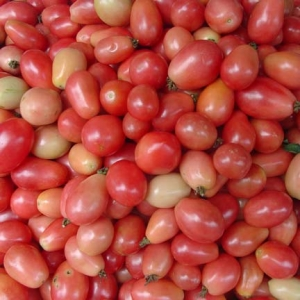 ASIAN * TOMATO THAI PINK EGG * ORGANIC HEIRLOOM SEEDS 2021