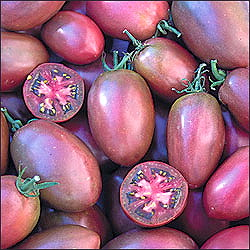 TOMATO * PURPLE RUSSIAN * ORGANIC HEIRLOOM SEEDS 2017