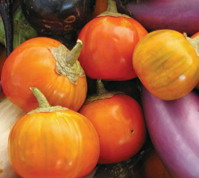 EGGPLANT * TURKISH ORANGE * ORGANIC HEIRLOOM SEEDS 2018