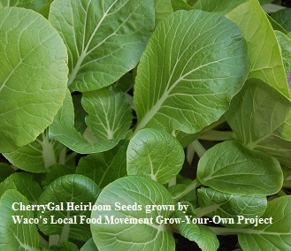 ASIAN * BOK CHOY BABY * ORGANIC HEIRLOOM SEEDS 2018