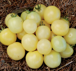 TOMATO * WHITE CHERRY * ORGANIC HEIRLOOM SEEDS 2018
